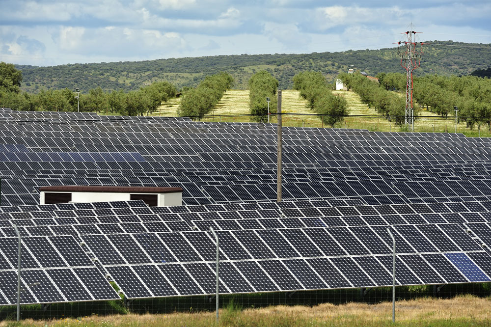 Photo of Solar energy in the Italian wine sector