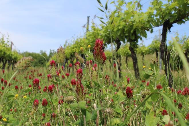Forår i vinmarken (Haidviertel)
