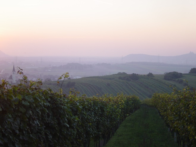 Udsigt ober vinmarkernde Haidviertel
